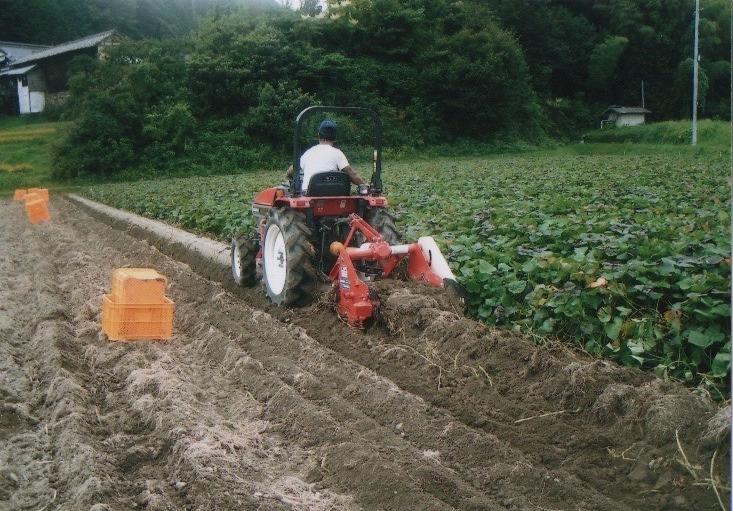 収穫の様子(9月上旬〜10月上旬)
